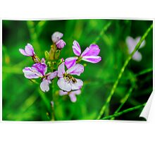 Purple Flowers with Fly Poster