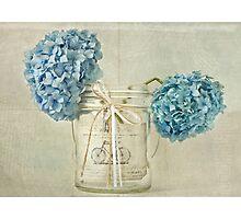 Vintage Blue Hydrangea Photographic Print