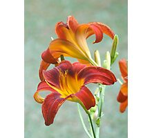 My Lilies Photographic Print