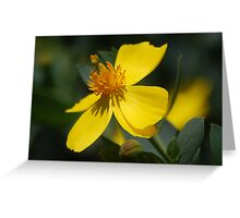 Tree Poppy Greeting Card