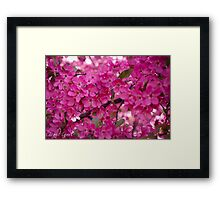 Spring time pink blossoms Framed Print