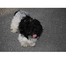 Pretty Pooch Photographic Print