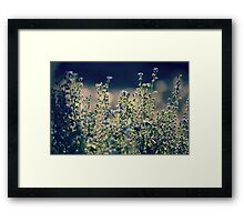 Tranquil Light Framed Print