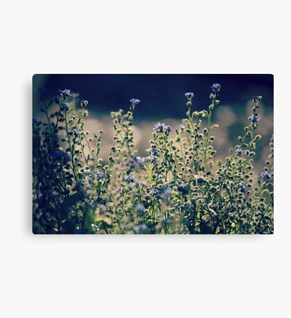 Tranquil Light Canvas Print