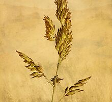 Meadow grass by John Edwards