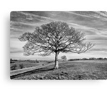 Skeletal Tree Metal Print