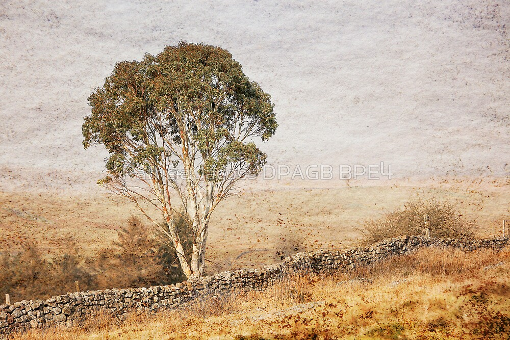 Breaon Beacons Wales by Patricia Jacobs DPAGB LRPS BPE4