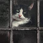Black and White Cat by Patricia Jacobs CPAGB LRPS BPE3