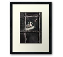 Black and White Cat Framed Print