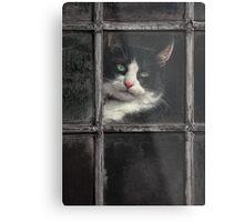Black and White Cat Metal Print