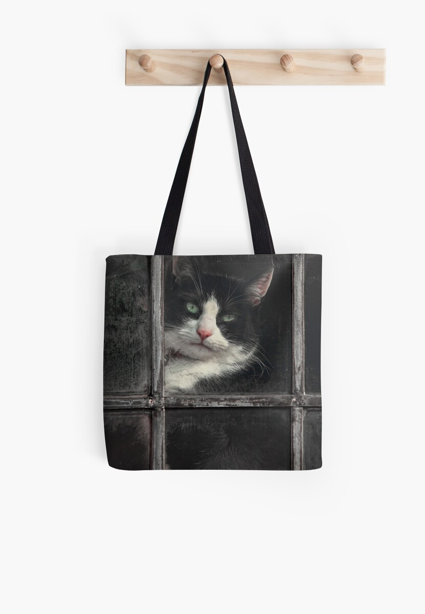 Black and White Cat by Patricia Jacobs CPAGB LRPS BPE4