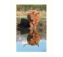 Highland Cattle Reflection Art Print