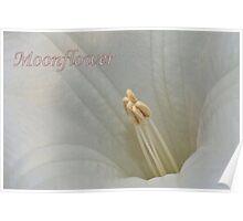 Moonflower Macro Poster