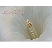 Moonflower Macro Photographic Print