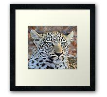 I am a pretty blue eyed leopard cub ! Framed Print