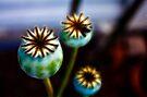 Poppies by Ubernoobz