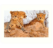 Do Cheetah Wink? Art Print