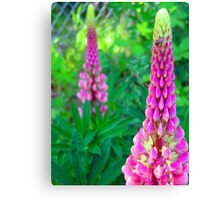 Luscious Lupin Canvas Print