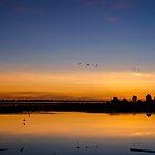 Brolga Fly Past at Dawn by Stephen  Nicholson