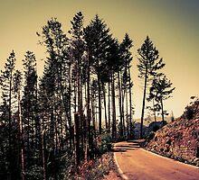 Woodland #2 by schwebewesen