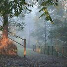 Early Morning Fog - SE Queensland by aussiebushstick