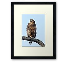 Calling To The World Framed Print