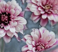 Pretty Pink by Rosemary Sobiera