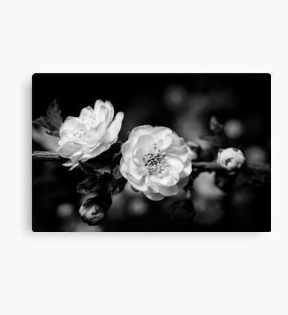 Twos (Monochrome) Canvas Print