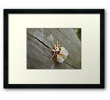 Bug! Framed Print
