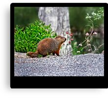 An Herbivore Named Sid Canvas Print