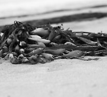 Seaweed Barwon Heads by Razorgrass
