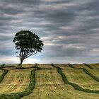 Lone Tree by Sam Smith