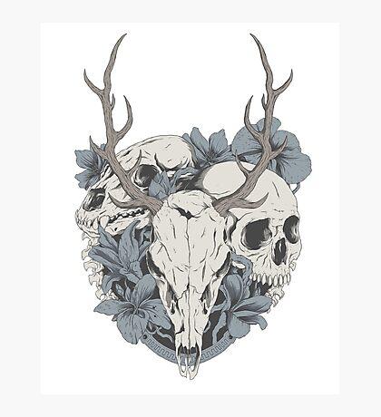 Skulls & flowers Photographic Print