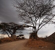 Welcome to the Serengeti by Kenji Ashman