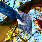 Prayer Flags by Fledermaus