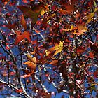 Leaves in Red and Gold by tenzil