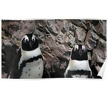 pinguins Poster