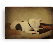 Now where did that Bit of Biscuit Get To? Canvas Print