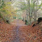 Gnoll in Neath - south Wales by griffithsphill