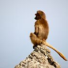King of the Castle. by jannina