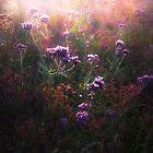 purple dance by pieter van der walt
