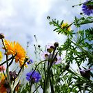 Look up and see the wild flowers bloom... by Yool