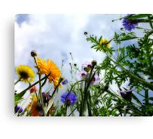 Look up and see the wild flowers bloom... Canvas Print