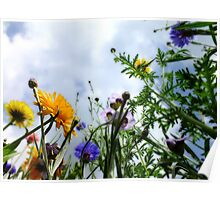Look up and see the wild flowers bloom... Poster