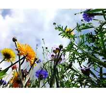 Look up and see the wild flowers bloom... Photographic Print