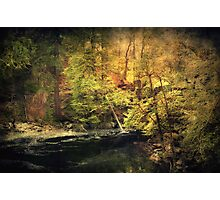 Old Forest Photographic Print
