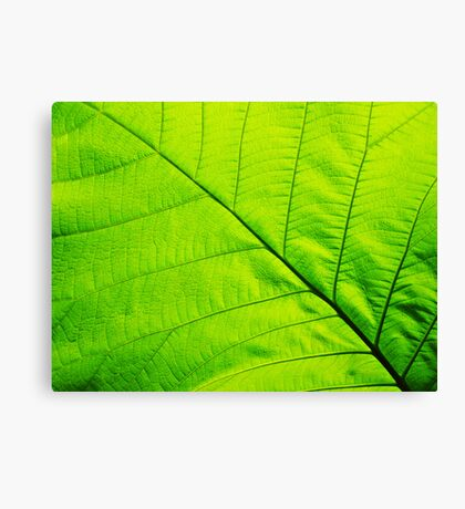 Macro Green Leaf Wrapped Canvas Canvas Print Canvas Print