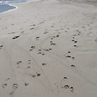 Footprints by Mish Chappell