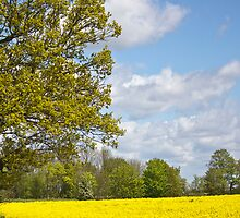 Rapefield by Mike Freedman