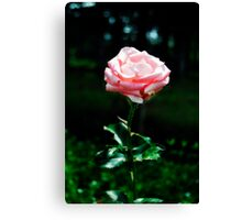 Beautiful Pink Rose Gallery Wrap Canvas Canvas Print